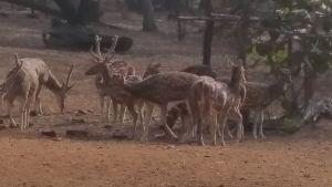Ballabhpur Wildlife Sanctuary