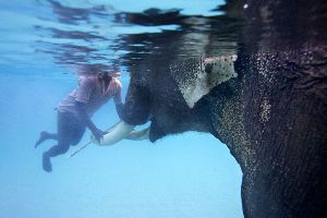 Try Snorkeling With Elephants