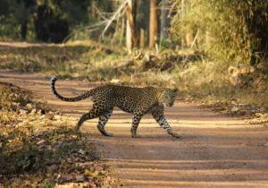 Nagzira Wildlife