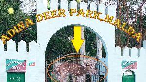Adina Dear Park
