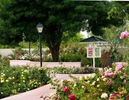 Rose Garden At Mesa Community College