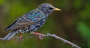 Kharmour Bird Sanctuary