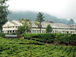 Tea Factories