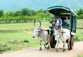 Bullock Cart Discovery