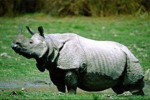 Spot One Horned Rhinos And More At Kaziranga National Park