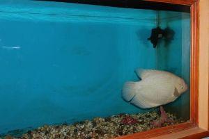 Karwar Marine Aquarium