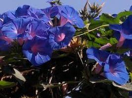 Flower Nurseries