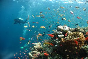Scuba Diving: An Experience To Remember