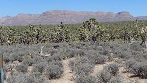 Big Horn Wild West Tours