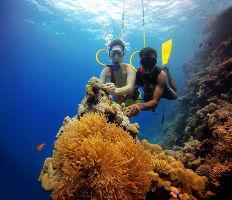 Coral Beauty In Bangaram