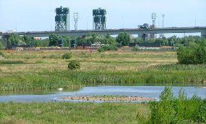 Portrack Marsh Nature Reserve