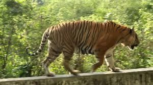 Bangladesh National Zoo