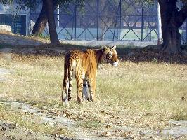 Mini Zoo Bhiwani