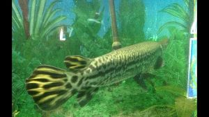 Jawahar Aquarium