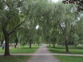 Salem Willows Park