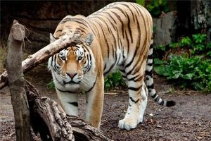 Bellary Zoo