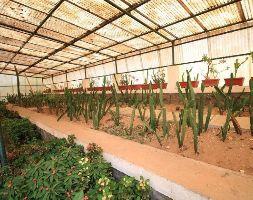 Sneh Rashmi Botanical Garden