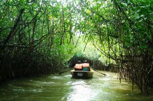 Pitchavaram Backwater