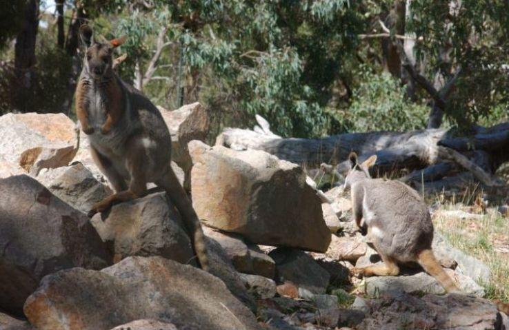 Cleland Wildlife Park In Adelaide South Australia Australia