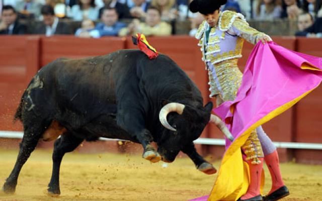 View Bull Fighting 2019, #1 top things to do in barcelona
