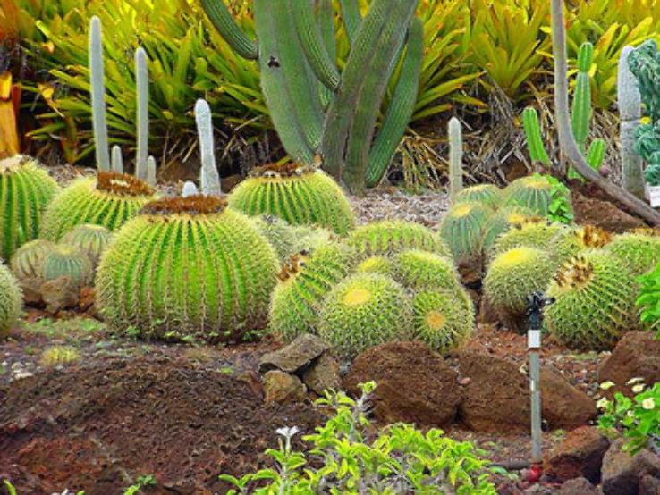 Cactus Garden in Parwanoo, Himachal Pradesh India - reviews, best ...