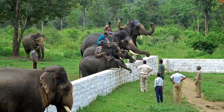 Dubare Elephant Camp 2020, #3 top things to do in kodagu