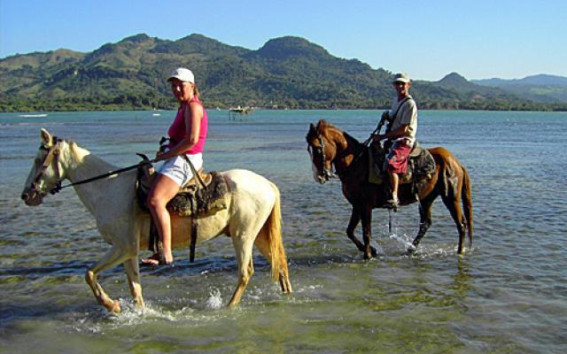 Golden Bay Horse Enjoy Golden Bay Horse...