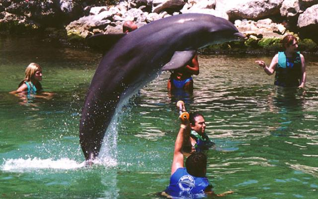 Swimming With Dolphins In Jamaica Reviews Best Time To