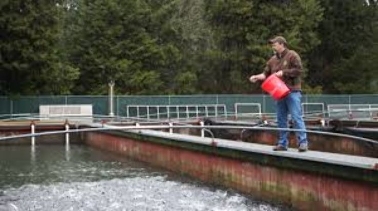 Willamette Fish Hatchery 2019, #2 top things to do in